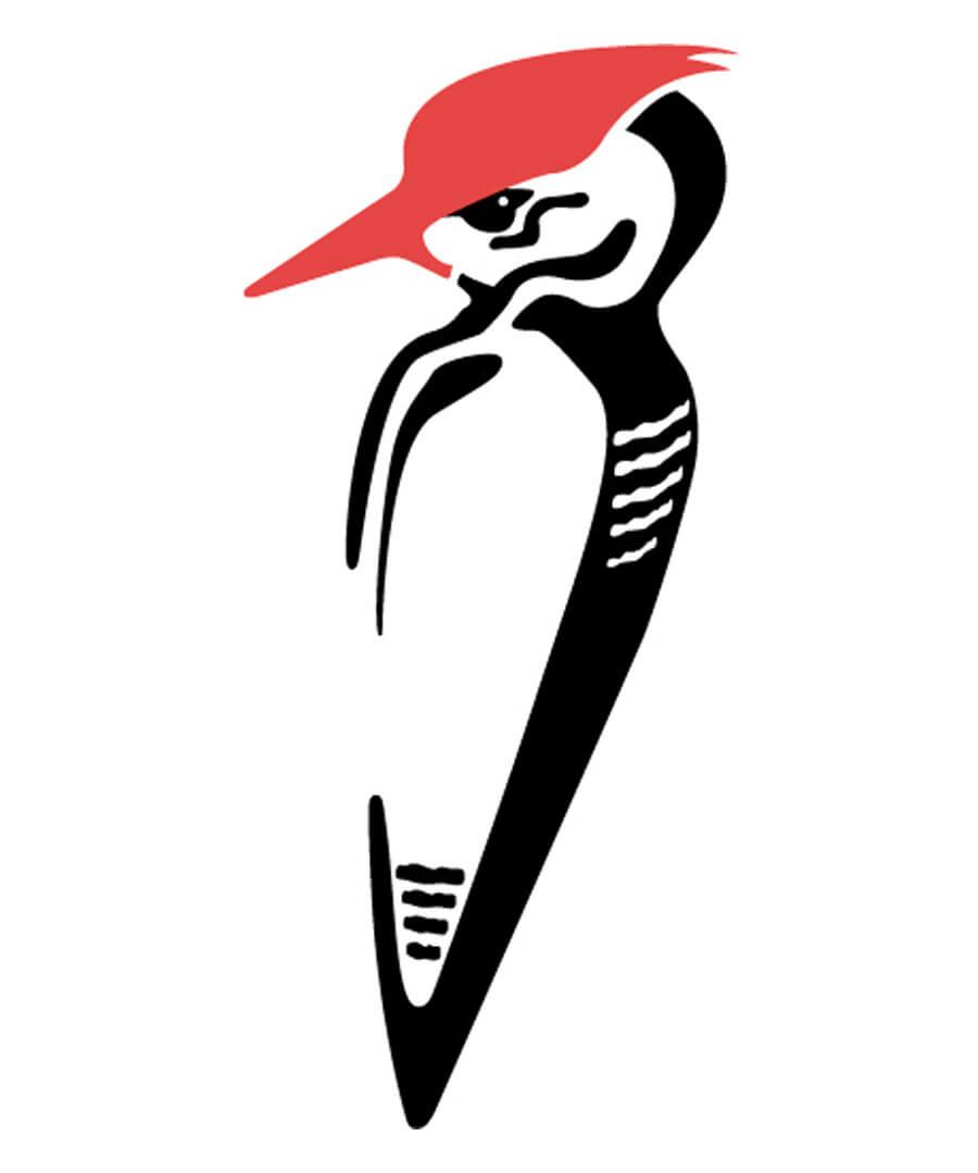 Haydn Symons Illustration Woodpecker Logo Design
